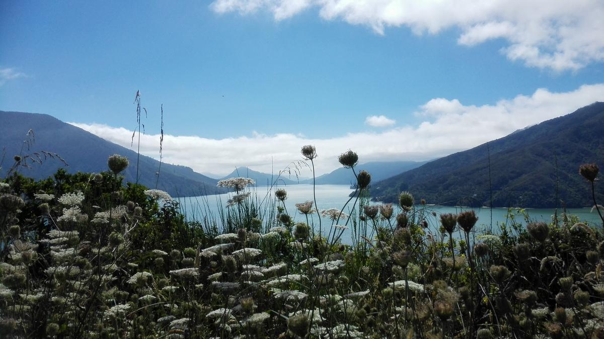 Nieuw Zeeland Facebook: Foto's & Video's Marlborough Sounds